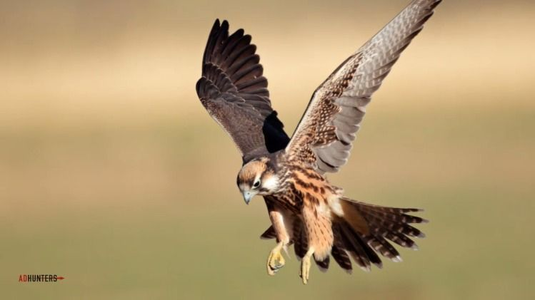Properties Chat | discuss  – Chit Chat #1075 - 1  image